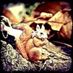 Furry Squirrel