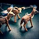The fleeting Deer